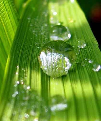 naturhi:  moderneon:  freshnix:  rehste:  fresh✖️modern  fresh // modern // neon // tropical // cute  modern freshfashion  xo