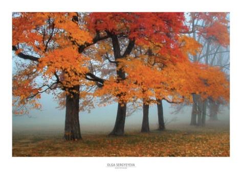 Autumn Leaves, Frames Prints, Colors Art, Beautiful, Autumn Fal, Art Prints, Fall Autumn, Colors Frames, Autumn Colors