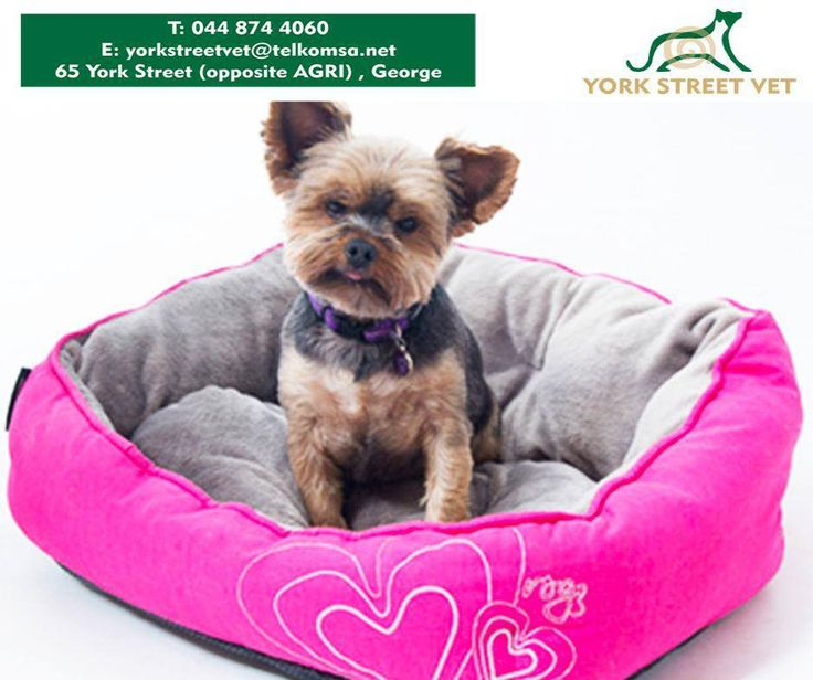 For those pooches who prefer a more luxurious style bed with spongy walls and a super-soft cushion, try the #Rogz dog beds from #YorkStreetBeds. #ilovemydog https://www.facebook.com/Yorkstreetvetshop/photos/pb.646016452164207.-2207520000.1439134251./811799935585857/?type=3