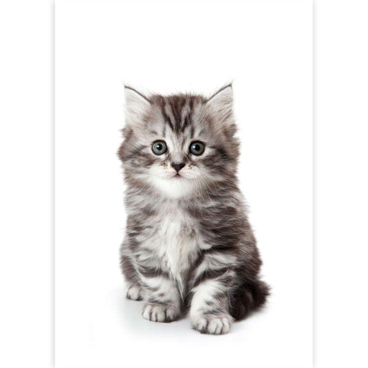 kattunge-plad.jpg (800×800)