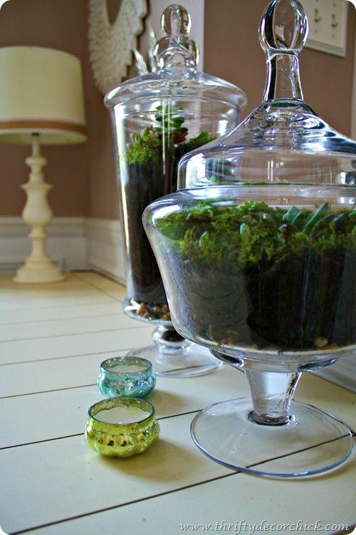 How to make a succulent terrarium (so easy!)
