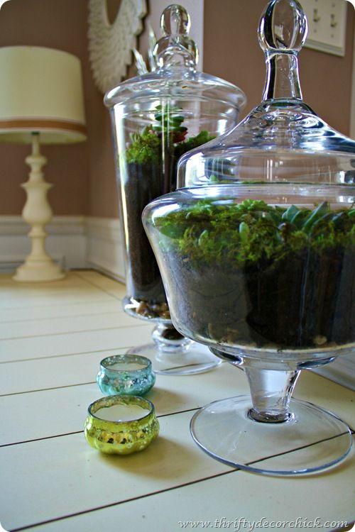 Miniature succulent terrariums