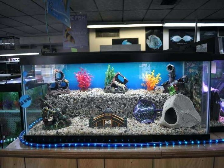 Glorious Fish Tank Decorations Illustrations Elegant Fish Tank Decorations And Fish Tank Decoratio Cool Fish Tanks Cool Fish Tank Decorations Fish Tank Themes