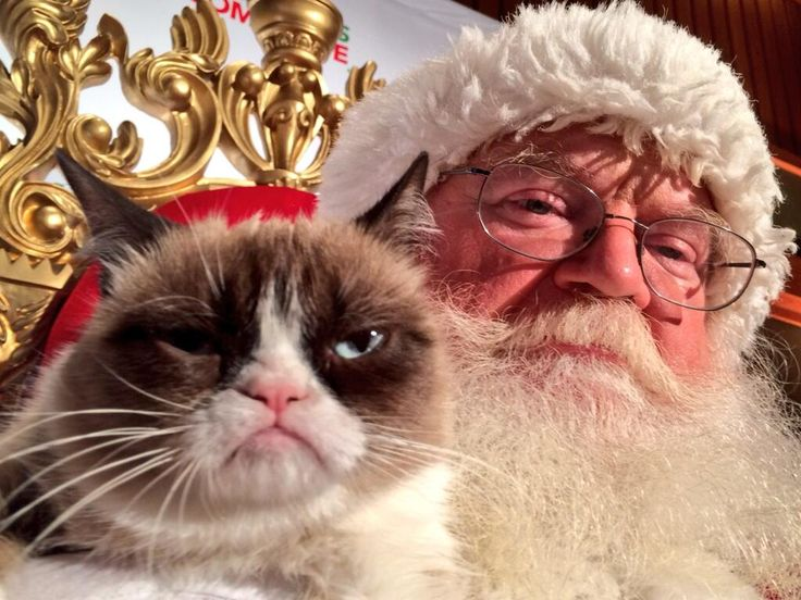 Tard and I seem to feel the same way about Christmas...