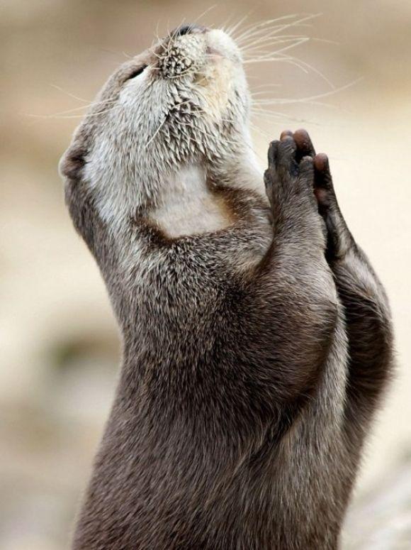 Dai-me paciência Senhor!
