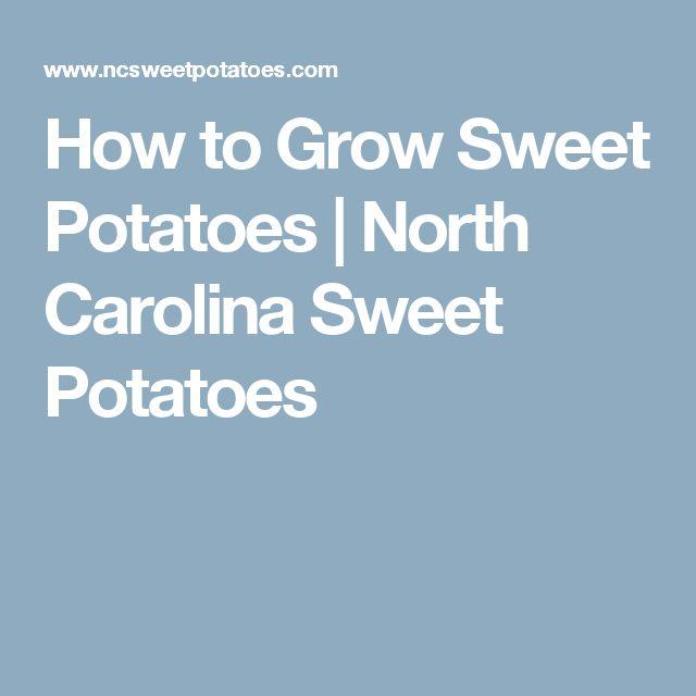 How to Grow Sweet Potatoes | North Carolina Sweet Potatoes