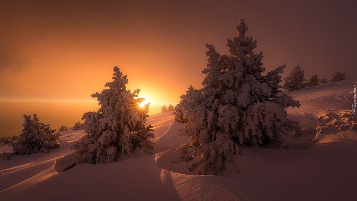 Zima, Śnieg, Zachód słońca, Świerki
