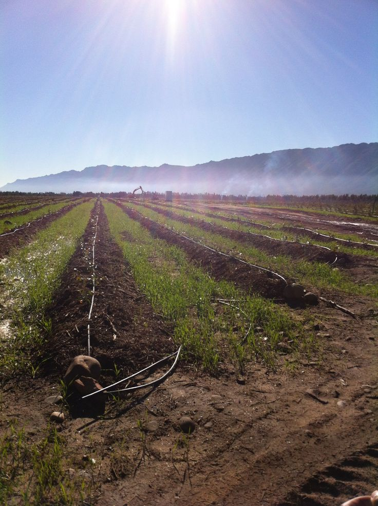 Lushof Farms in Porterville, South Africa