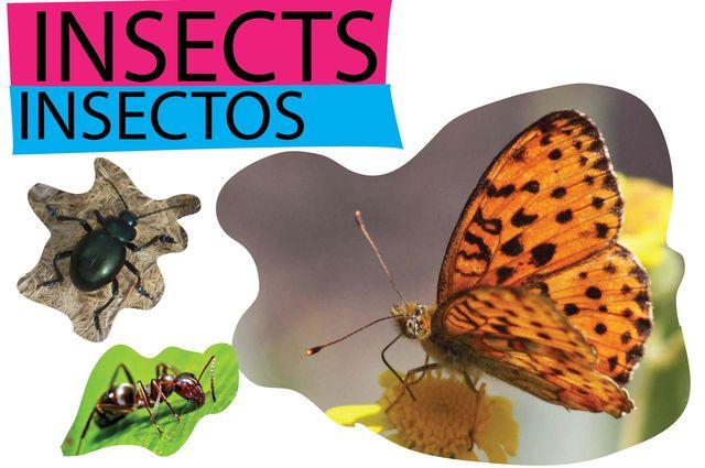 Los animales en inglés y en español: INSECTOS EN INGLÉS (y arácnidos)