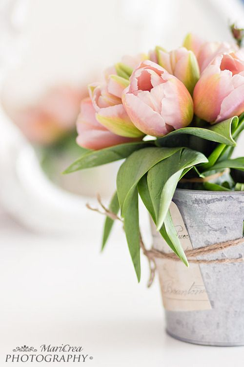 Pale pink tulips with silver pot or mercury glass, could tie favors to it