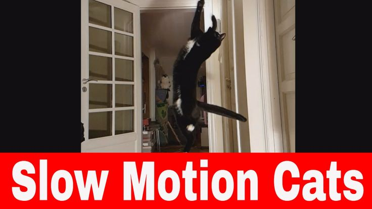 Cats Jumping And Playing In Slow Motion - 4K Video