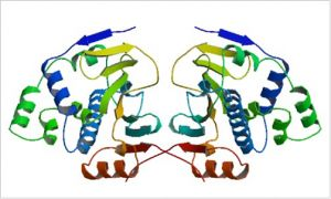 HSP90 structure - Structure of the tetragonal form of the N-terminal domain of Hsp90 from yeast.