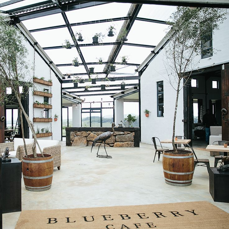 BLUEBERRY CAFE in KZN Midlands, South Africa