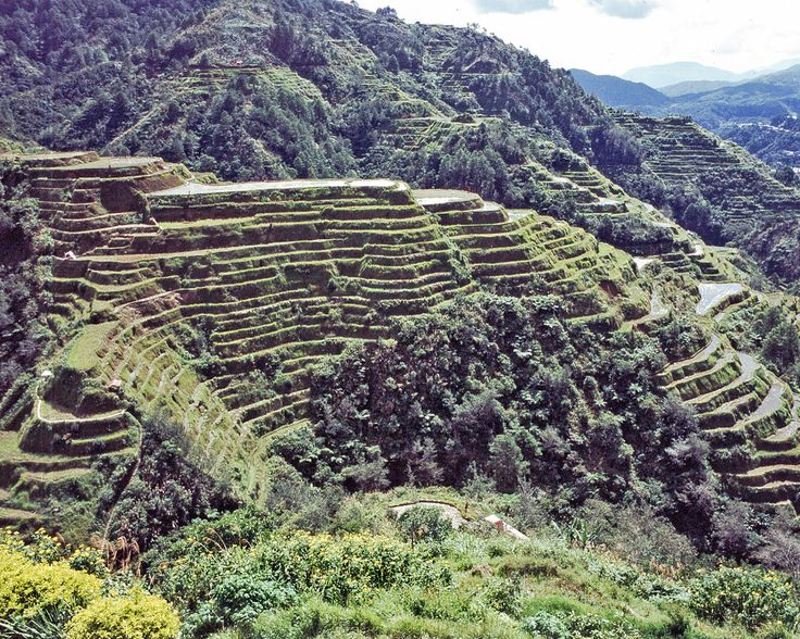 rice terraces in the north of Luzon