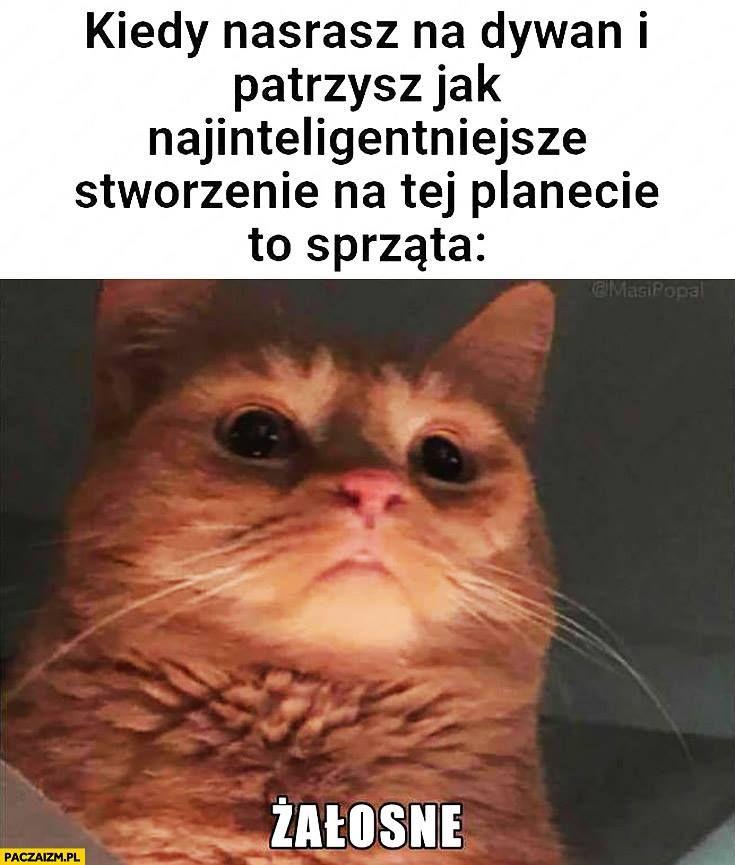 Memy z wyższej półki