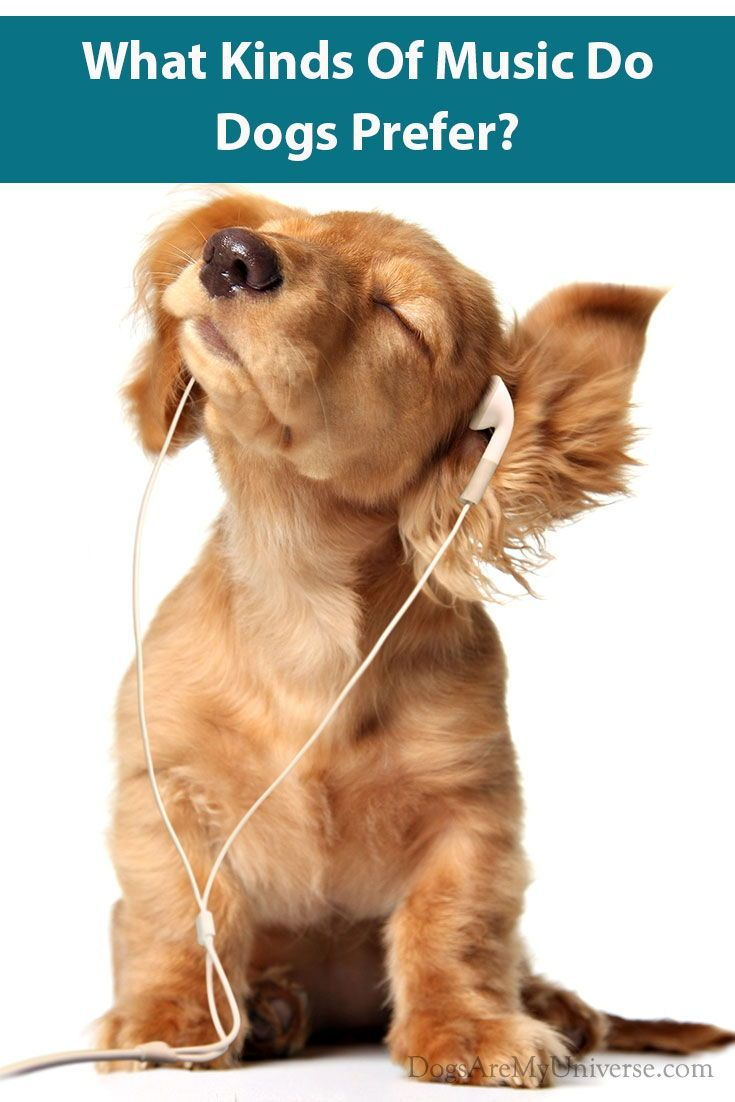 Do Dogs Enjoy Music Dog Wallpaper Puppies Funny Dogs And Puppies
