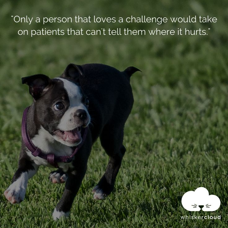 Veterinarians are so amazing. Do you agree? We love this veterinary quote!