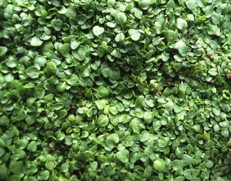 13 Of The Best Ground Cover Perennials For Your Yard