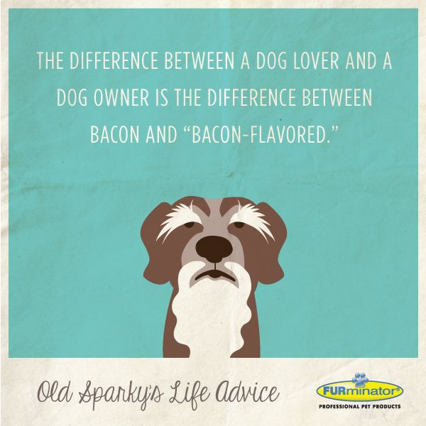 "The difference between a dog lover and a dog owner is the difference between bacon and ""bacon-flavored."""