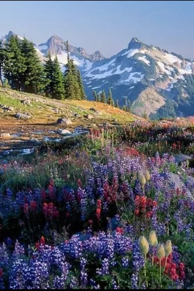 Yellowstone I Want To Go Kelly Pinterest Landscaping Beautiful Places And Scenery