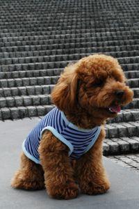 犬服型紙無料:タンクトップ / 愛犬のための犬服、ペット服の型紙・作り方・教室 milla milla