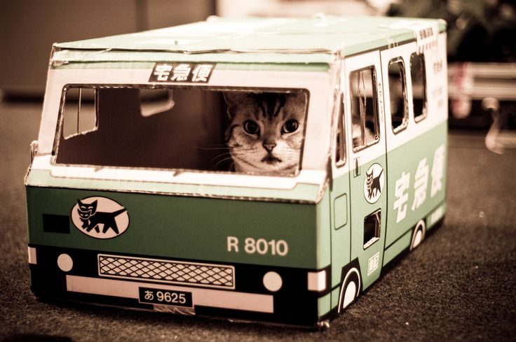 bus driver cat!: Cats, Buses, Animals, Cat Bus, Bus Driver, Funny Animal, Cat House, Kitty