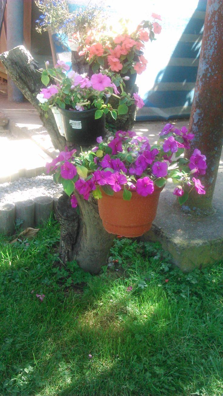 otra parte del tronco para sostener mis flores