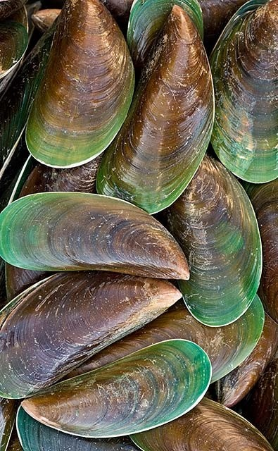 Giant Green Mussels I use OMEGA XL  from the green lip mussel for my arthritis and it has helped a lot.