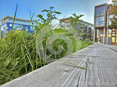 Closeup shot of grass sticking out over a wooden bench, with modern neighborhood in the background.
