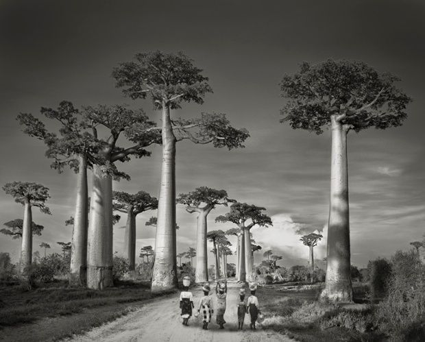 Beautiful dark twisted fantasies: the world's most ancient trees – in pictures Off to Market, Madagascar, 2006