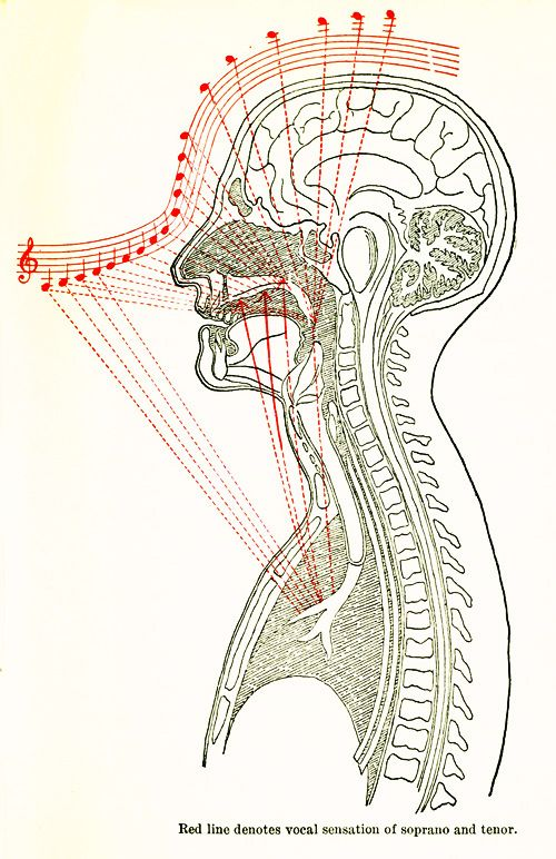 Haven't read all of this - so not sure if I agree... but it looks crazy cool - and it's from 1902! How To Sing: Lilli Lehmann's Illustrated Guide, 1902 | Brain Pickings