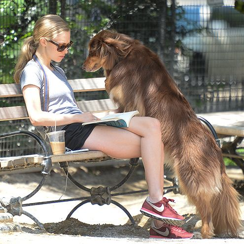 Star Tracks: Thursday, June 18, 2015 | DOG DAYS OF SUMMER  | Amanda Seyfried's pooch Finn is looking for a little love on Wednesday as he stares down his owner on a New York City park bench.