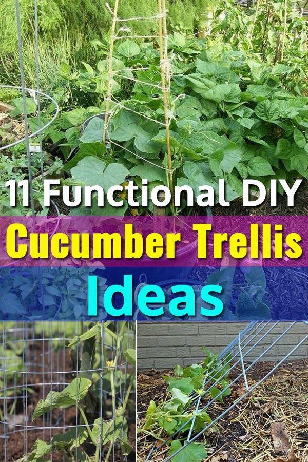 11 Functional Diy Cucumber Trellis Ideas Cucumber Trellis Vegetable Garden Trellis Vegetable Trellis