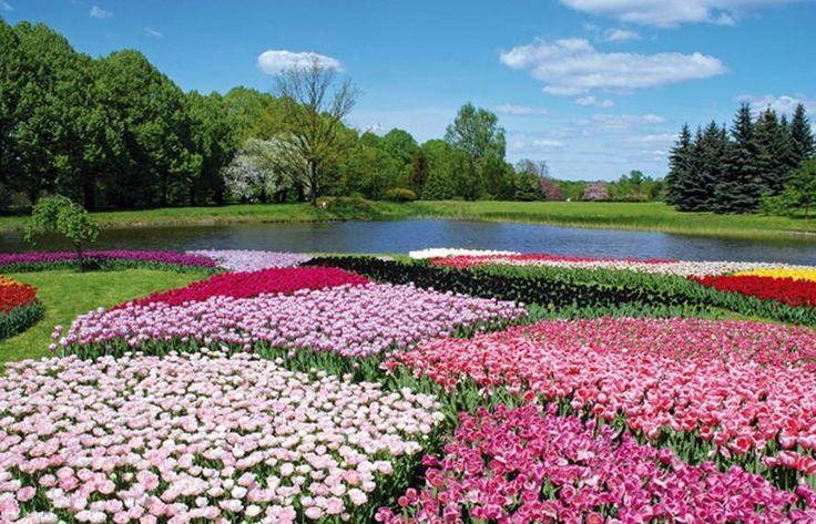 Ogród Botaniczny w Łodzi   Zgromadzono w nim kolekcję około 4,5 tys. roślin!  Można nawet podziwiać okazy 130-letnich palm. Warto zrealizować ten pomysł na weekend: http://www.nocowanie.pl/noclegi/lodz/ogrody_botaniczne/141311/