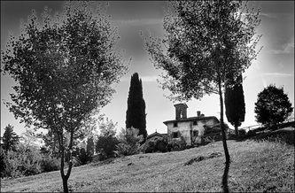 Piero Farolfi - Natura. Alberi - Piero Farolfi - Immagini e parole