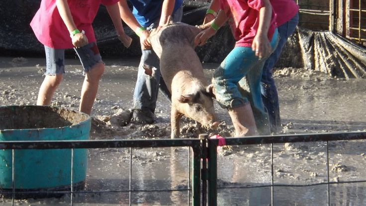 Petition · Entertainment: Marcia Harris Utah County Fair: Utah County Fair: Stop pig wrestling at the Utah County Fair · Change.org