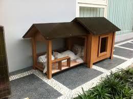 desain kamar kucing