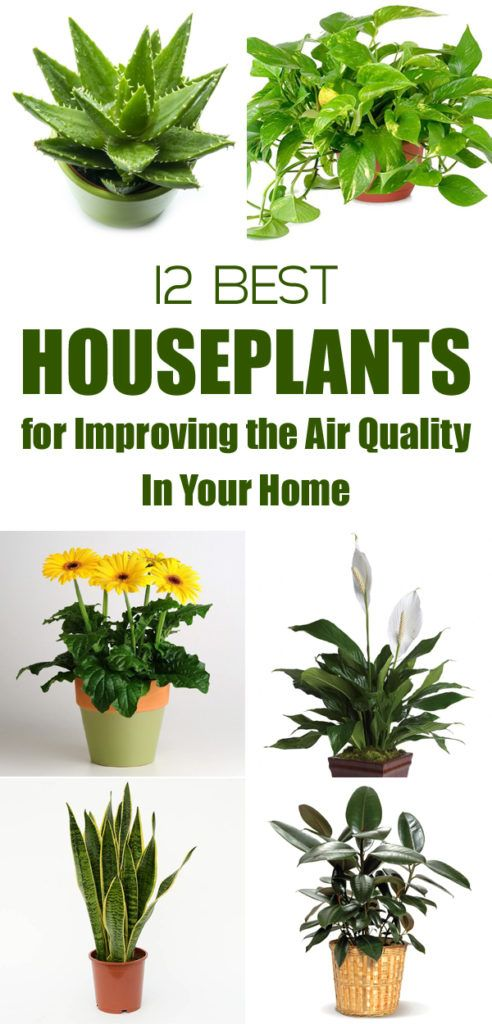 Best 20 indoor air quality ideas on pinterest air cleaning plants indoor house plants and - Plants can improve ambience home ...