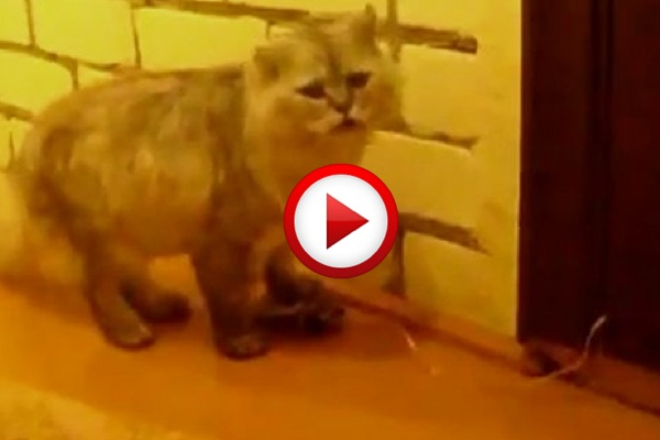 Doorbell for the cat #cats, #animals, #funny, #videos, #videobox, #pinsland, https://apps.facebook.com/yangutu