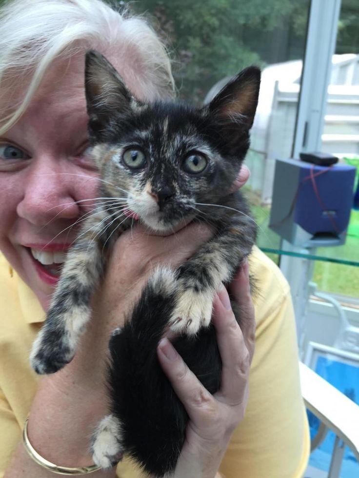 Adopt SHANNON and TARA Courtesy Listing on Petfinder