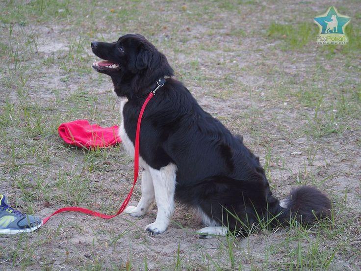 Szkoła dla psów PiesPotrafi w Szczecinie zaprasza na szkolenia i kursy. Prowadzimy przedszkole dla szczeniąt, kursy posłuszeństwa grupowe i indywidualne, spacery socjalizacyjne grupowe, konsultacje behawioralne, szkolenia klikerowe i inne. Wykwalifikowana kadra wszystkie zajęcia prowadzi z pasją i zaangażowaniem.