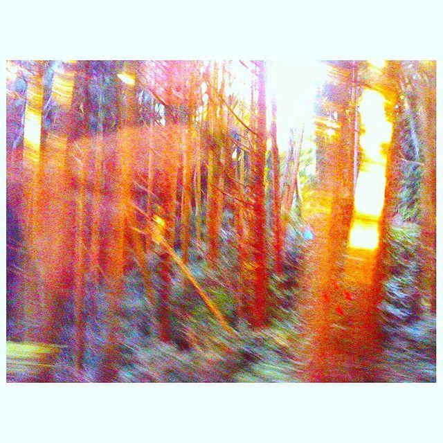 【matsudashuka】さんのInstagramをピンしています。 《脳みそ覚醒してねれないー。 #デジハリ #デジタルハリネズミ4  #トイカメラ #森 #伊豆 #lifeisshort  #doit  #digitalharinezumi  #toycamera #thisizu #izu #forest》
