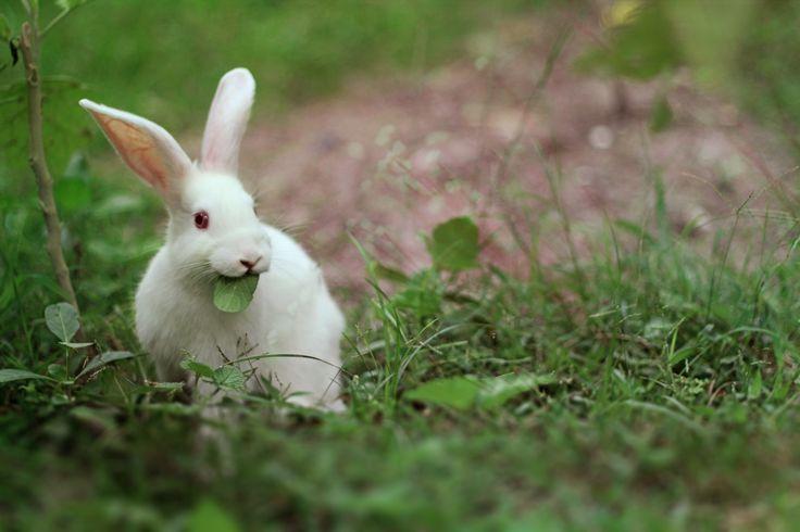 """""""white rabbit..."""""""