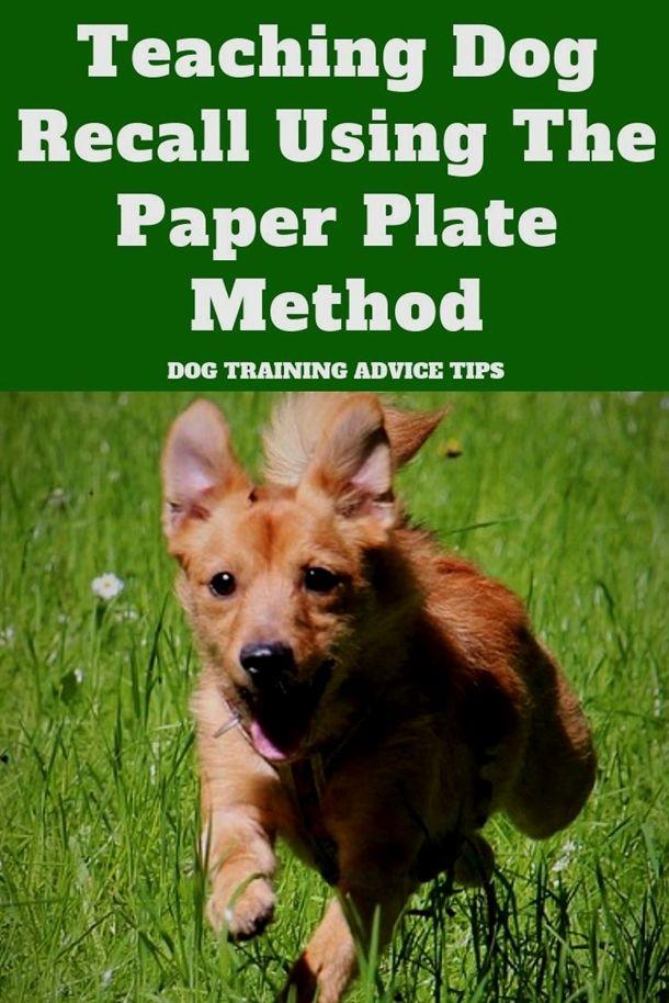 Dog Training Kansas City North Dog Training San Antonio 2 Dog