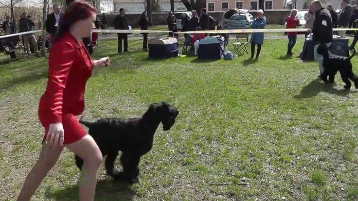 2016  Szerencs Dog Show
