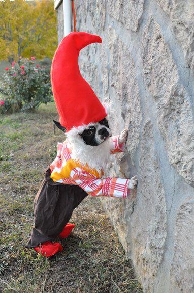 lawn gnome dog halloween costume - Halloween Costumes In Boston