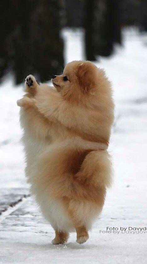 So fluffy!!