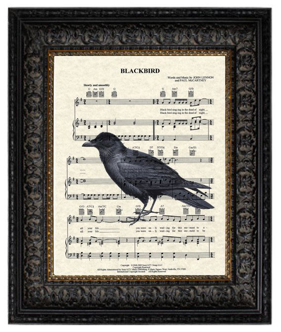 Hey, I found this really awesome Etsy listing at http://www.etsy.com/listing/89535564/the-beatles-blackbird-song-sheet-music