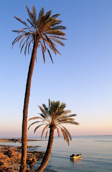Djerba, the land of the Lotus Eaters