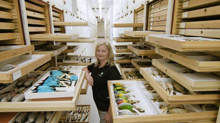 Смитсоновский национальный музей естественной науки   Коллекции птиц, бабочек, жуков, молюсков в институте Смитсона